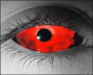 Bloodlust Contact Lenses